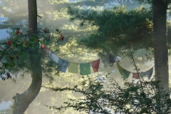 FLAGS FOREST